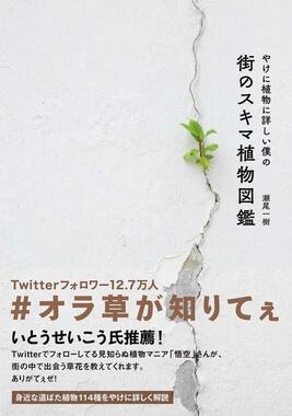 『やけに植物に詳しい僕の街のスキマ植物図鑑』
