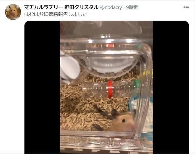 マヂカルラブリー野田クリスタルさんのツイッターより