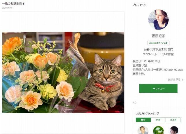 藤原紀香さんの愛猫「まー之助」