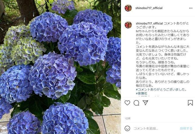 中居さんから贈られた紫陽花(大竹さんのインスタグラム@shinobu717_officialより)