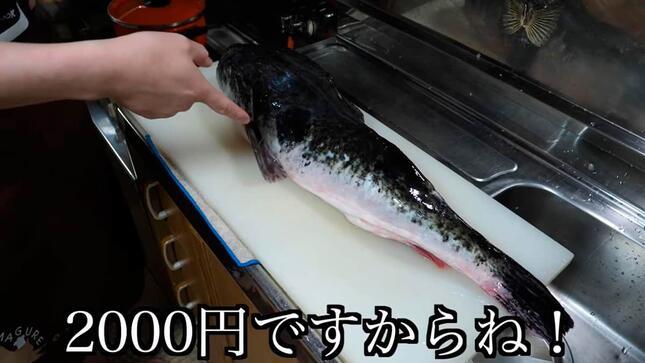 2000円の破格トラフグ。きまぐれクックさんの動画より