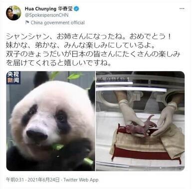 中国外務省の華春瑩報道局長による3か月ぶりの日本語ツイート。パンダの双子の誕生を「シャンシャン、お姉さんになったね。おめでとう!妹かな、弟かな、みんな楽しみにしているよ」などと祝った