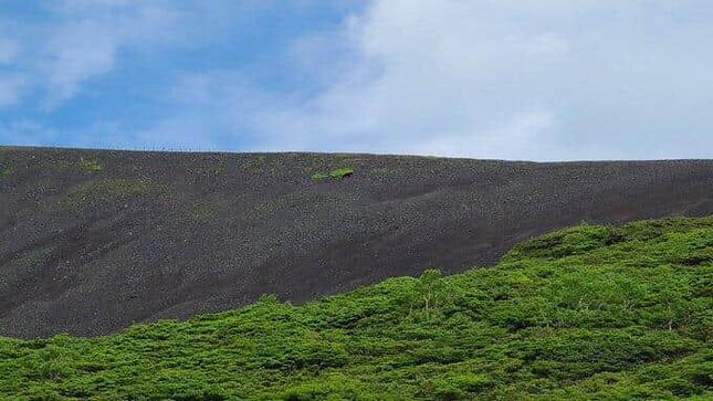 秋田駒ヶ岳の登山道下斜面を行くツキノワグマ。ドローンに追いやられるようだったという(写真は、ツイッター投稿者提供)