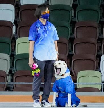あくびをしていると話題の盲導犬(写真:SportsPressJP/アフロ)