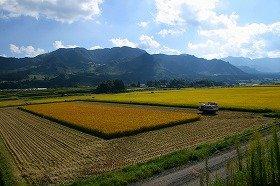 農業をテーマにしたファンドが増えている(写真はイメージ)
