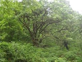 本当は森林保護を目的とした組織なのだが…(写真はイメージ)