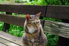 ネコのエサやりを巡っては、各地でトラブルが相次いでいる