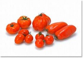 野菜苗シリーズ「本気野菜」第1弾はプレミアムトマト