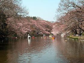 吉祥寺「井の頭公園」。都会と自然のバランスが取れていると人気が高い