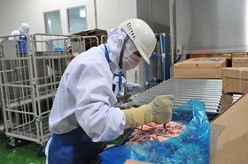 スピード解凍された牛肉の解凍温度をチェック(スターゼン株式会社 マクドナルド事業部 千葉工場)