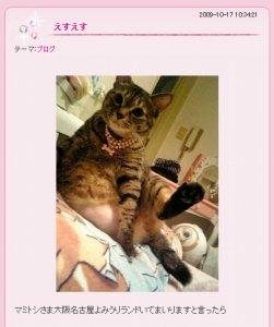 中川翔子さんの飼い猫「マミタス」。お腹には大きなハゲが