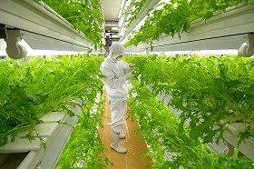 フェアリーエンジェルの完全密閉型野菜工場