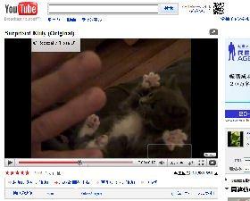 「ユーチューブ」に投稿された「Surprised Kitty (Original)」には「かわいい~」と3万ものコメントが付いている