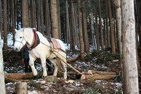 岩手県遠野市で古くから行われている「馬搬」