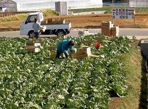 特産の野菜や果物の影響が心配(写真はイメージ)