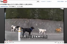 犬が群れている。(ビデオニュース・ドットコムの動画から)