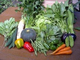 給食に使う野菜から放射性物質を徹底排除