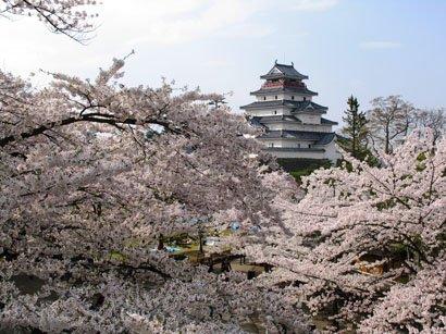 会津若松市のシンボル鶴ヶ城。毎年春には花見客で賑わう