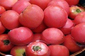 トマトが大人気!