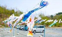 みんなで絵を描いたこいのぼりが青空のもと綺麗にはためきました(福島県相馬市、2012年4月29日)
