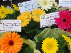 ミニコンサート終了後、住民の皆さんにお配りした花と応援メッセージ(2012年5月13日 宮城県石巻市)