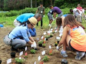 7月にはAARの引率の下、プリンストン大学の学生が訪問。「被災地に花とまごころを届けよう」キャンペーンを通して届いたお花とメッセージプレートを植えました(宮城県女川町、2012年7月3日)