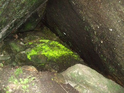 「あったぞ~」―神秘の輝きを見せるヒカリゴケに一斉に感嘆の声=薬師岳の山中で