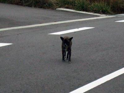 誰もいない町の道路にぽつんといた犬