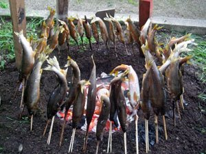 「これは放射能の心配はないよ」。地元の人が近くの猿ヶ石川でとれた鮎を差し入れてくれた。辺りには香ばしい匂いが漂った=とうわボランティアの家で