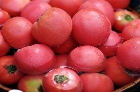 「トマトブーム」が続いている!