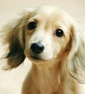 そっくりな犬と飼い主、ポイントは「目」?