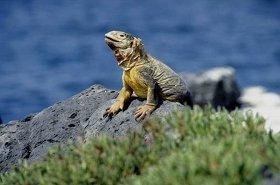 エクアドル旅行はガラパゴス諸島へ行くためだった?(画像はグーグルマップより)