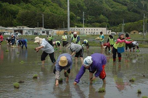 田植えは仮設住宅わきの田んぼを借りて行われた=2013年5月25日、大槌町小鎚の小鎚第5仮設団地