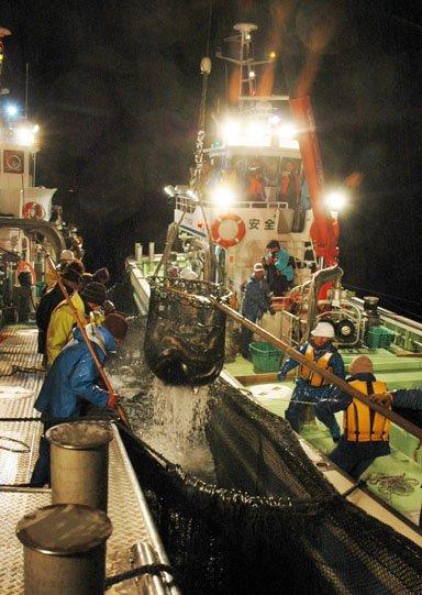 定置網で獲った魚を船倉に移す乗組員=2013年11月14日午前3時40分、大槌町の大槌湾