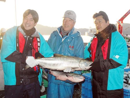 水揚げされたサケを披露する左から露木晴雄さん、小石道夫さん、松下隆夫さん=2013年11月14日午前6時30分、大槌港の魚市場