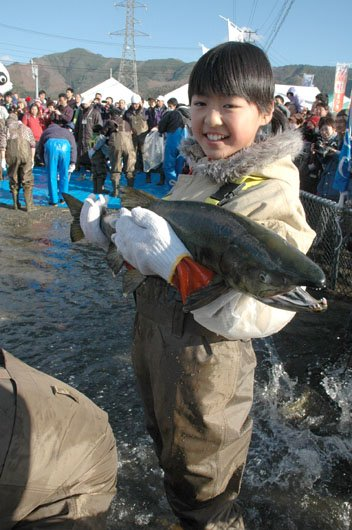 サケのつかみどりは10人1組で10組100人が挑戦した=2013年12月1日、大槌町の大槌川河川敷
