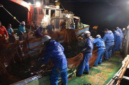 昨シーズンに2年ぶりに再開された秋サケ定位網漁=2012年11月14日、大槌湾