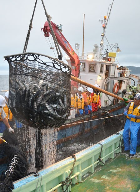 定置網から魚をすくい上げて船倉に移す漁師たち=2012年9月5日、大槌湾