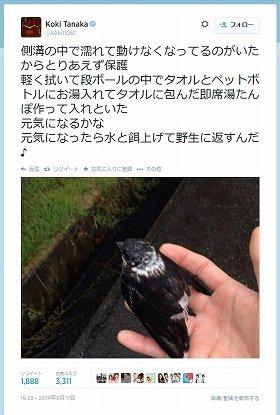 野鳥保護を告白したツイート