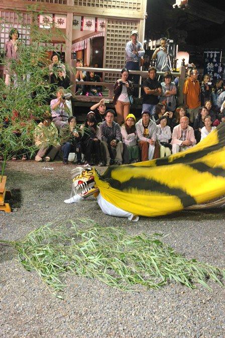 「大槌祭り」で舞う虎舞。祭りには町内外から大勢の観客が詰めかけます=2013年、9月22日、大槌町内の小鎚神社の宵宮