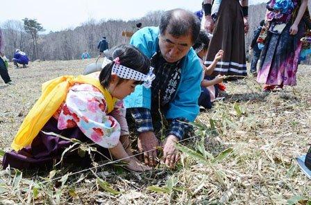 植樹祭でドロノキの苗を植樹する参加者たち=2014年4月27日、大槌町の新山高原