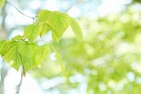 植物の力を経済成長に生かす(画像はイメージ)