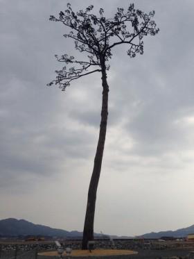 余震と津波に油断は禁物だ(岩手県陸前高田市「奇跡の一本松」、2014年3月撮影)