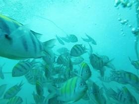 「未利用魚」にも熱い視線(画像はイメージ)