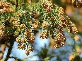 毎年1600万本以上が新たに植樹されている