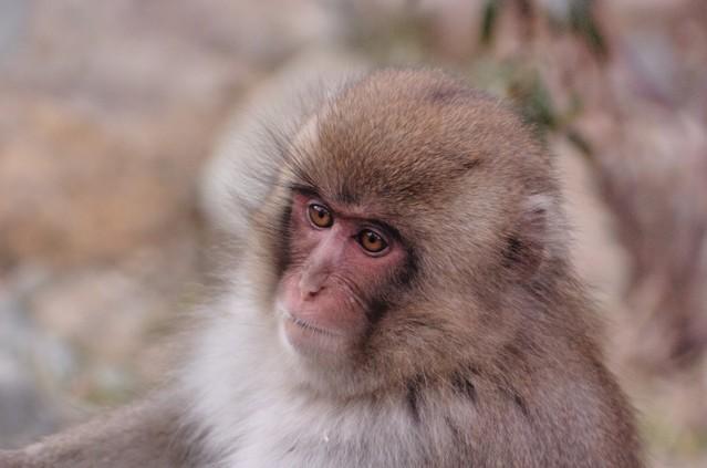 赤ちゃんザルの名前に「シャーロット」は失礼なのか 高崎山動物園に苦情300件以上、ネットで議論