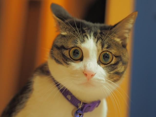 ネコもアルツハイマー病になる 人間だけの病気じゃなかったの?