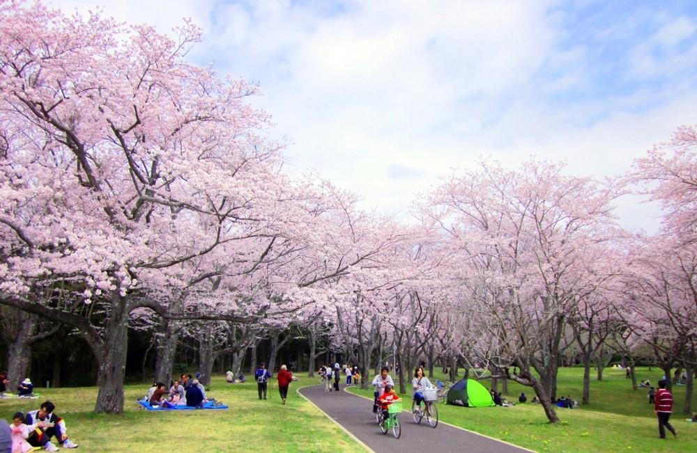 花見で横浜の公園半分以上を5日間「場所取り」 ネットで非難殺到して「謝罪」「撤退」した大企業