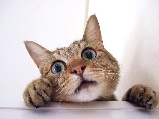 すぐキレる人はネコのウンチが原因かも 脳を遠隔操作する恐ろしい虫が中に...