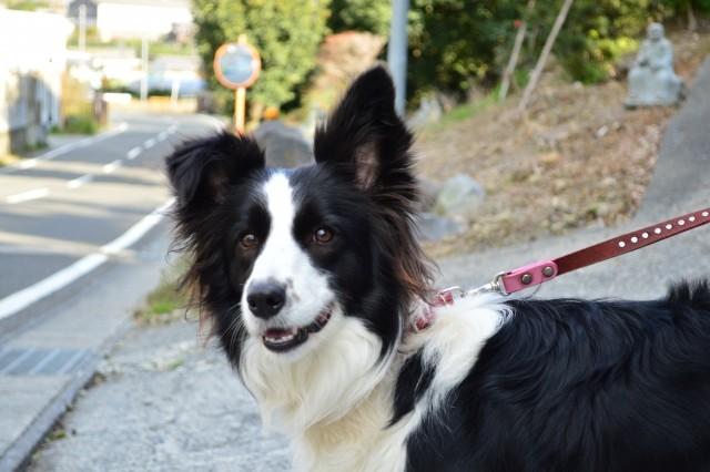 犬のふんを片づけないと「おしおき」 うんちのDNA鑑定で不心得者を特定